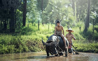 Boy riding black water buffalo on body of water photography