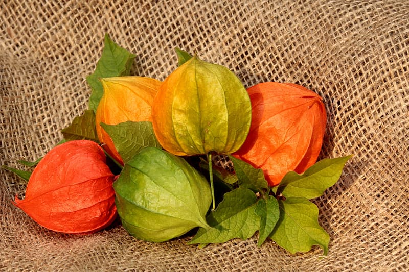 Red, green, and orange physalis on brown textile
