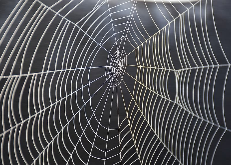 White spider web in close up photography