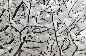 Snow covered tree branches during daytime