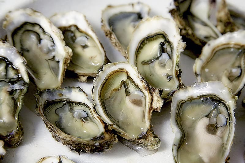 Closeup photography of opened oysters