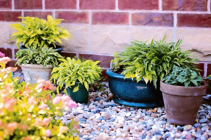Yellow and green potted plants beside brown and beige concrete brick wall at daytime