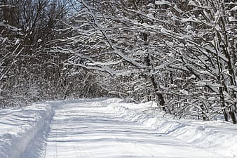 Forest path covered with snow surrounded by trees