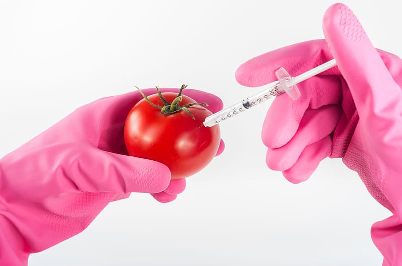 Person in pink rubber glove using syringe in tomato