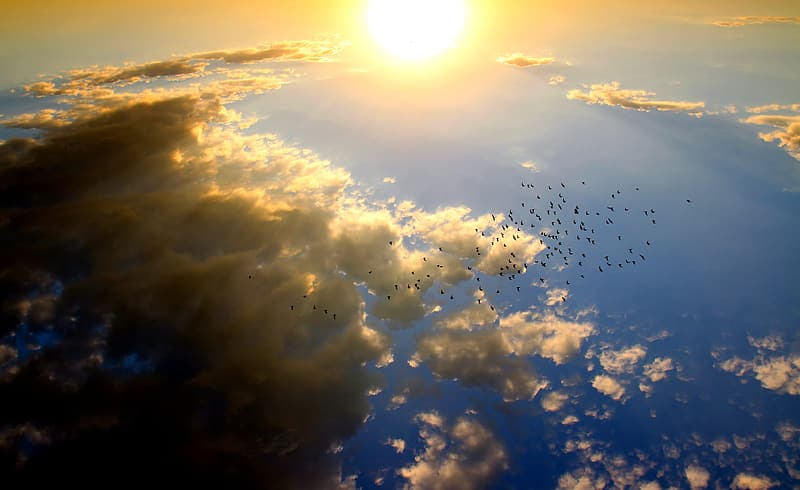 Aerial photography of flock of birds flying during daytime