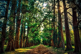 Road between green trees during daytime photo