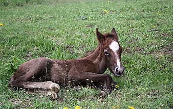 Black and white horse lying on green grass