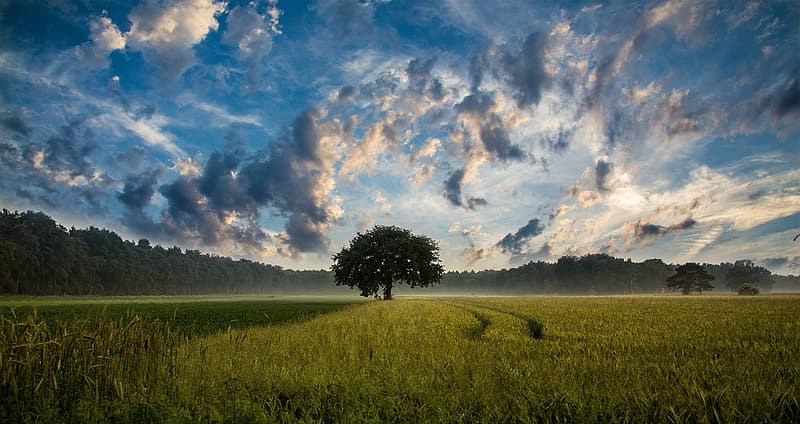 Green tree in between field during daytime