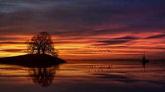 Silhouette of tree on body of water during sunset