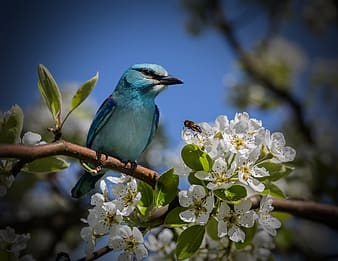 Blue bird perch on branch of tree