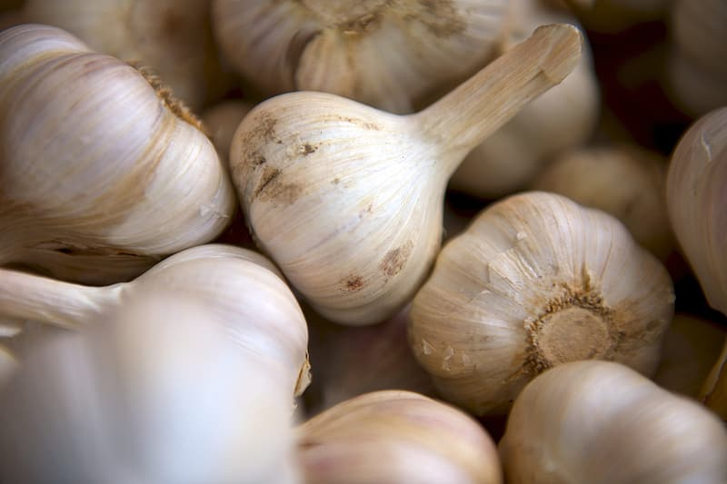 White garlic in close up photography