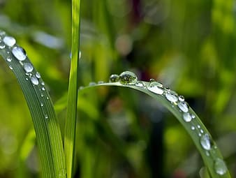 Close-up photography of dew drops on grass