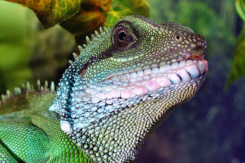 Close up photo of green and white lizard
