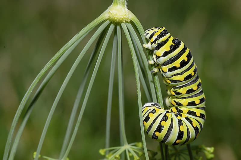 Yellow and black caterpillar on green plant