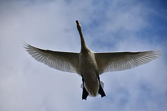 White bird flying under blue sky during daytime