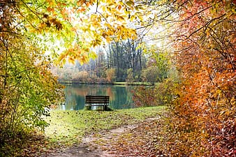 Brown wooden bench near body of water and trees during daytime
