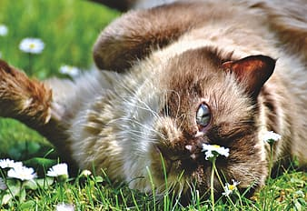 Brown and white cat on green grass during daytime