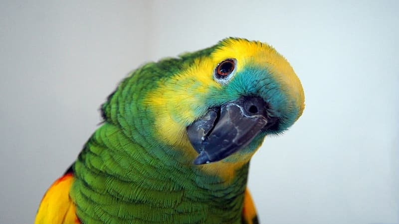 Shallow focus photography of green and yellow parrot