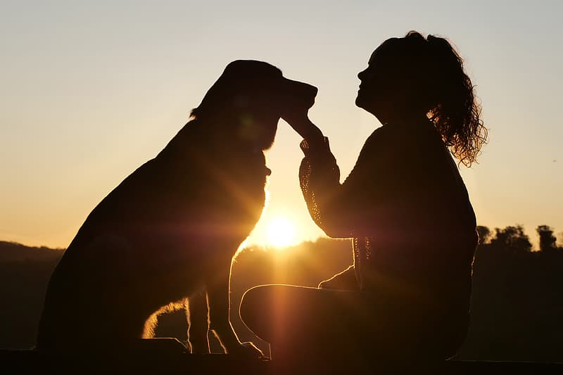 Silhouette of woman kissing brown short coated dog during sunset