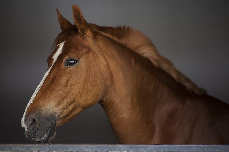 Closed up photography of horse
