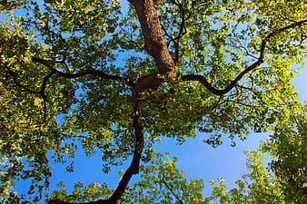 Green and yellow leaf tree under blue sky during daytime