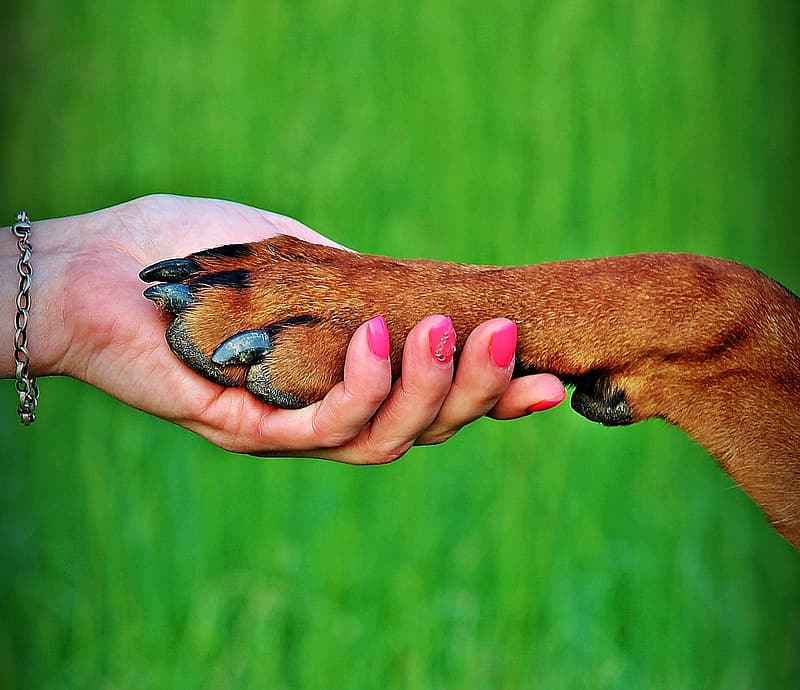 Person's hand holding dog's paw
