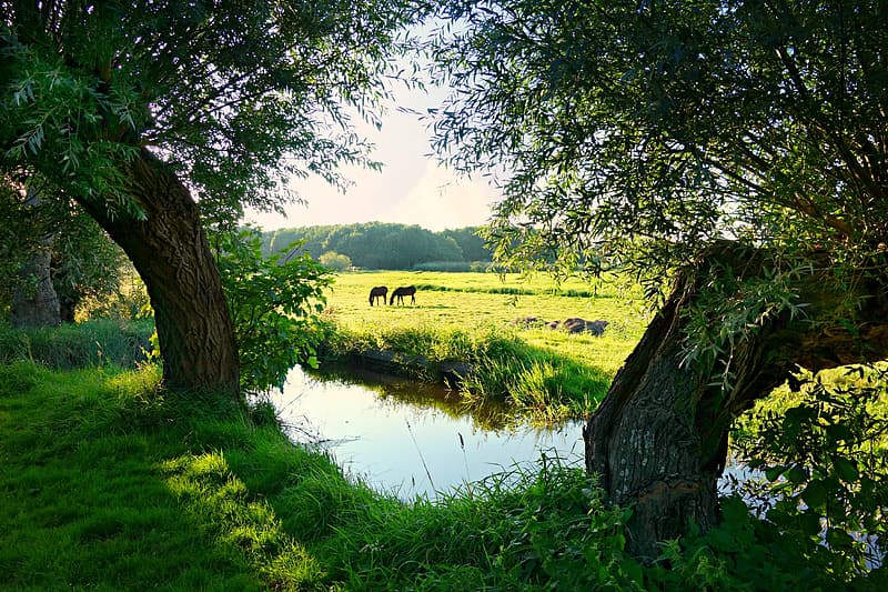 Two animals on grass field near river with trees