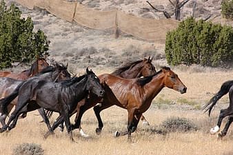 Black and brown horses near trees