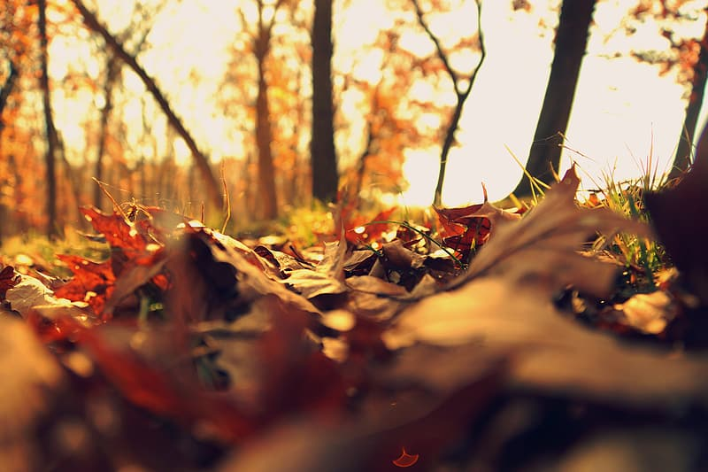 Close-up photograph of autumn leaves