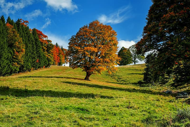 Brown tree on green grass field under blue sky during daytime