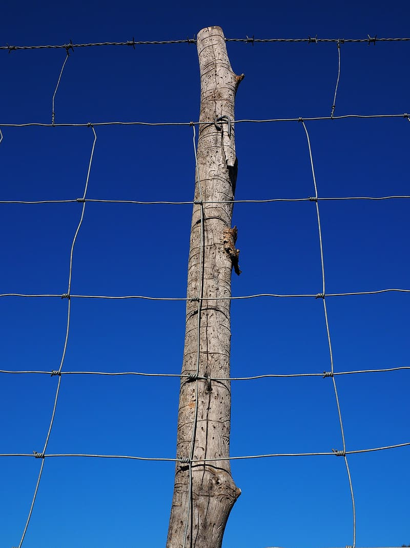 Tree without twigs behind gray steel fence