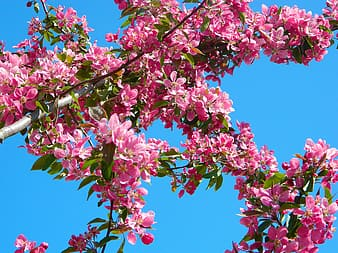 Pink clustered flowers under blue clear sky