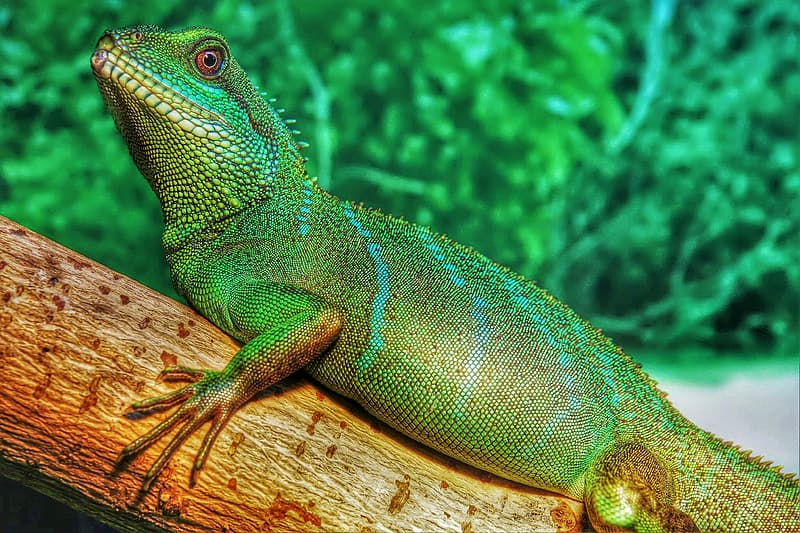 Green and brown lizard on brown wood