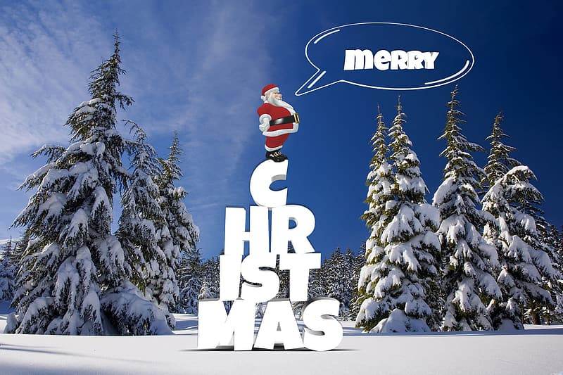Pine trees cover with snow Merry Christmas illustration