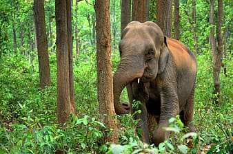Young elephant at jungle