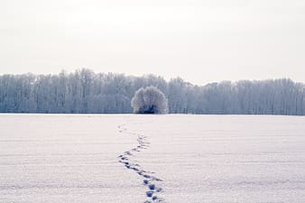Photo of snow coated open field near tree at daytime