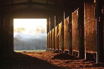 Horse stable with sunlight