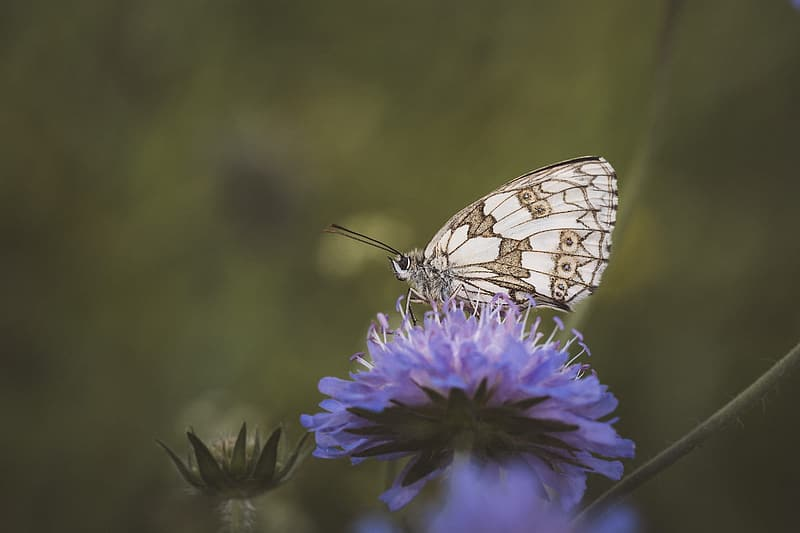 White and brown butterfly perching on blue flower selective focus photography