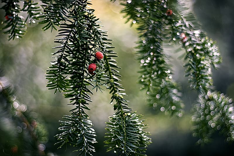 Green pine tree with red and yellow baubles