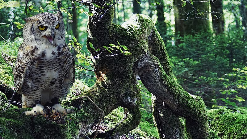 Grey owl near green covered grass wooden tree