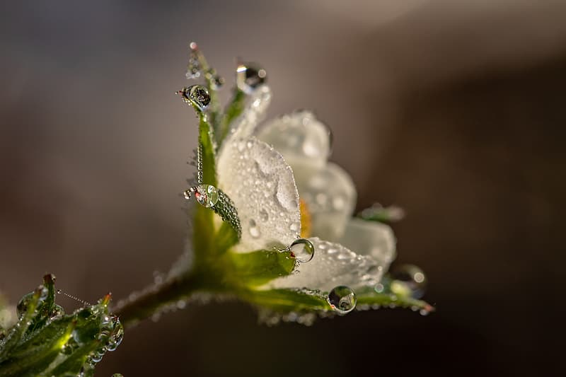 Macro shot photography of gray and green flower in bloom