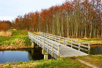 White and gray wooden bridge with tall brown trees during daytime