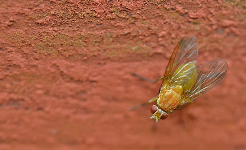 Closeup photo of yellow fly