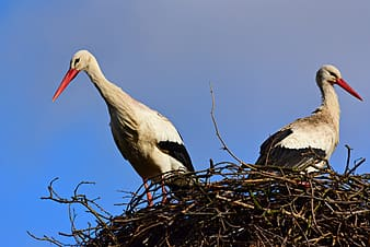 White stork perched on nest during daytime