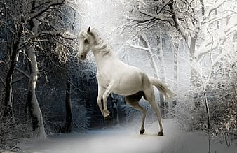 White horse and bare trees