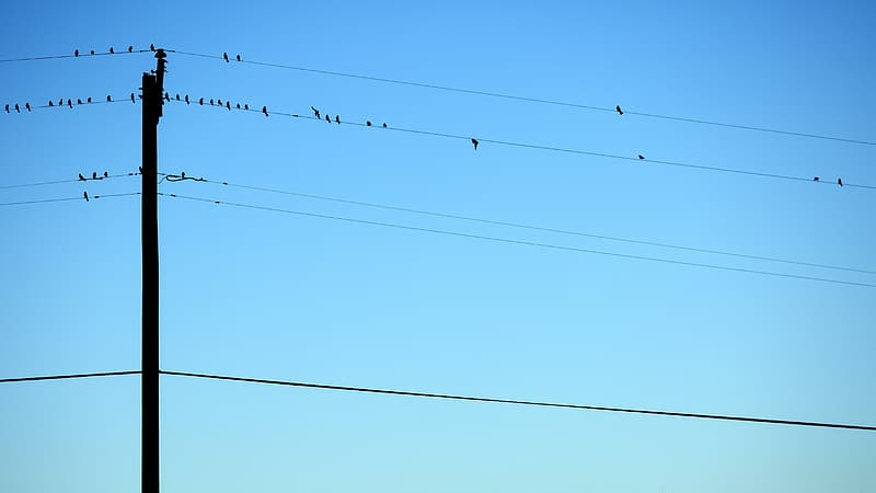 Flock of bird perched on power lines during daytime
