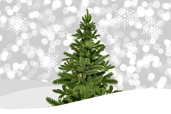 Photo of green Christmas tree