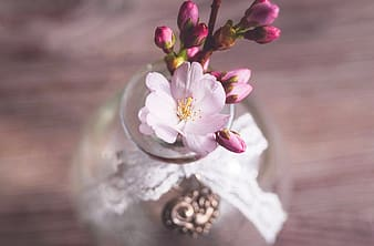 Pink and white flowers on clear glass vase