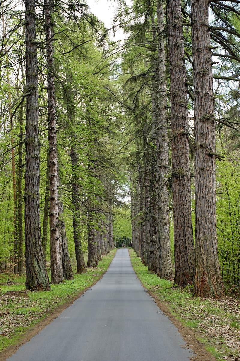 Road between trees during daytime