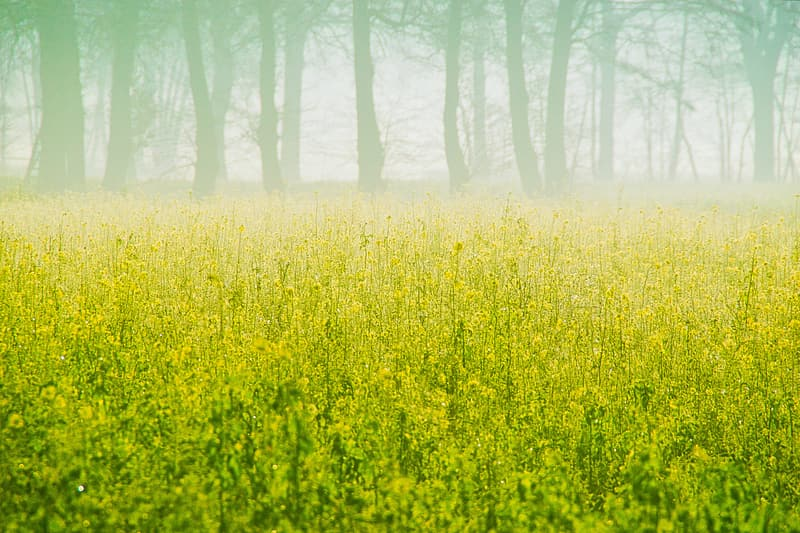 Yellow flower field near bare trees during daytime